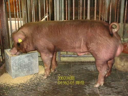 中央畜產會200709期D1362-03拍賣照片