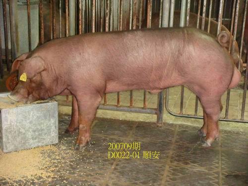 中央畜產會200709期D0022-01拍賣照片