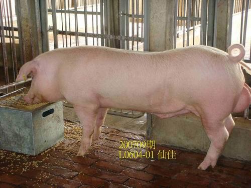 中央畜產會200709期L0604-01拍賣照片