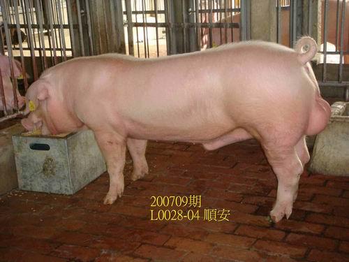 中央畜產會200709期L0028-04拍賣照片