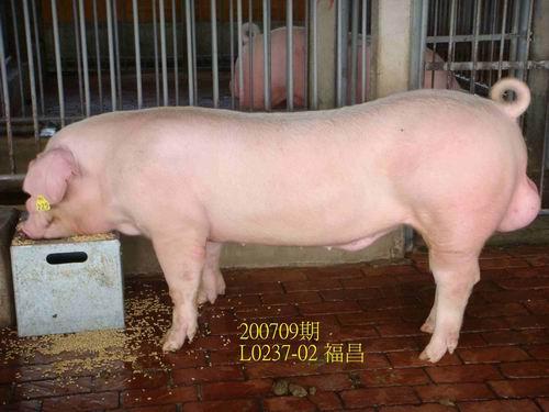中央畜產會200709期L0237-02拍賣照片