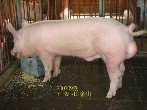 中央畜產會200709期Y1391-10拍賣照片