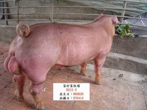 台灣種豬發展協會9703期D0215-03側面相片