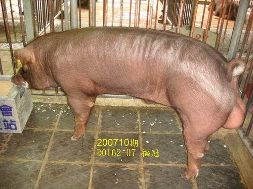 中央畜產會200710期D0162-07拍賣照片