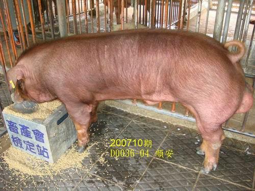 中央畜產會200710期D0036-04拍賣照片