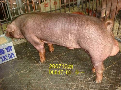 中央畜產會200710期D0647-01拍賣照片