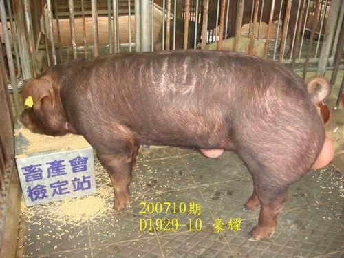 中央畜產會200710期D1929-10拍賣照片