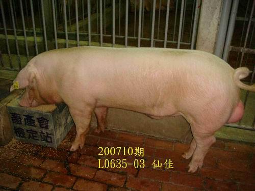 中央畜產會200710期L0635-03拍賣照片