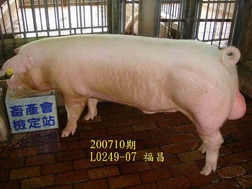 中央畜產會200710期L0249-07拍賣照片