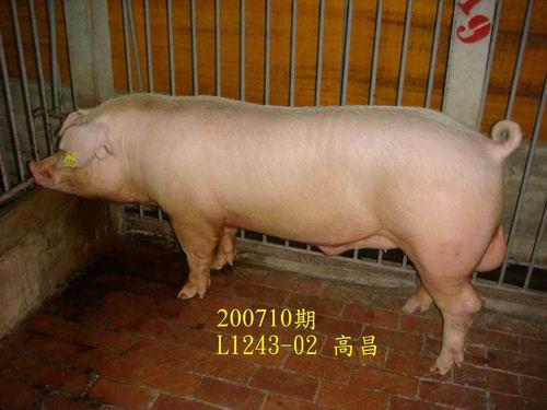 中央畜產會200710期L1243-02拍賣照片