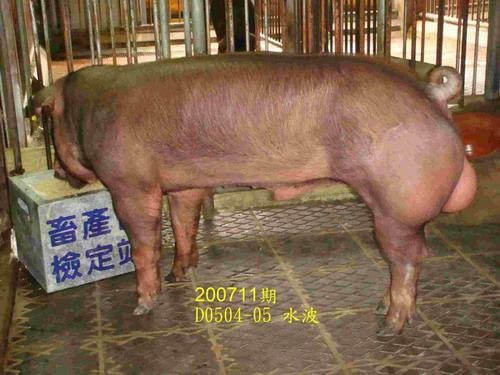中央畜產會200711期D0504-05拍賣照片
