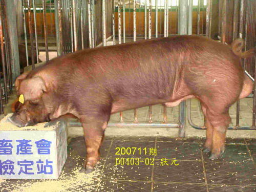 中央畜產會200711期D0403-02拍賣照片