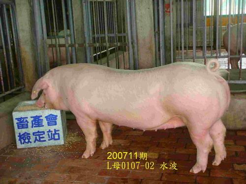中央畜產會200711期L0107-02拍賣照片