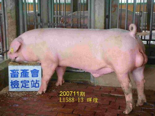 中央畜產會200711期L1588-13拍賣照片