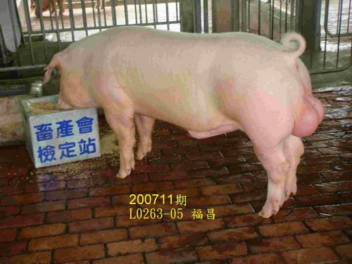 中央畜產會200711期L0263-05拍賣照片