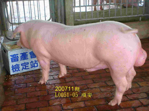 中央畜產會200711期L0051-05拍賣照片