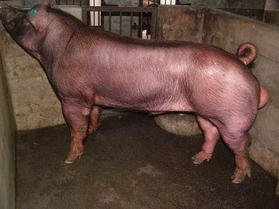 台灣動物科技研究所竹南檢定站9610期D1607-03拍賣相片