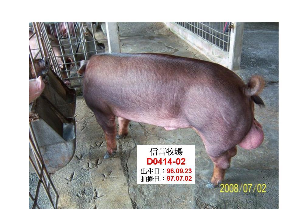 台灣種豬發展協會9706期D0414-02側面相片