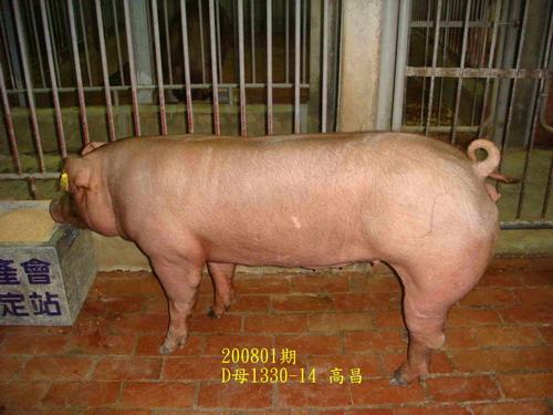 中央畜產會200801期D1330-14拍賣照片