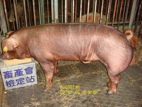 中央畜產會200801期D1702-06拍賣照片