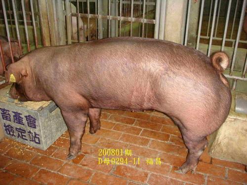 中央畜產會200801期D0294-11拍賣照片