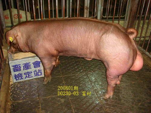 中央畜產會200801期D0230-03拍賣照片