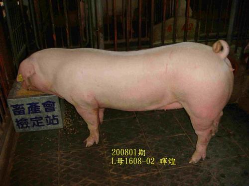 中央畜產會200801期L1608-02拍賣照片