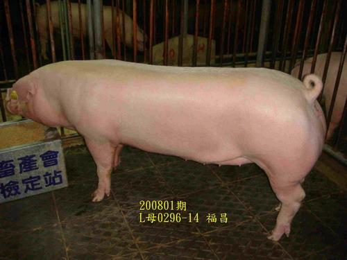 中央畜產會200801期L0296-14拍賣照片