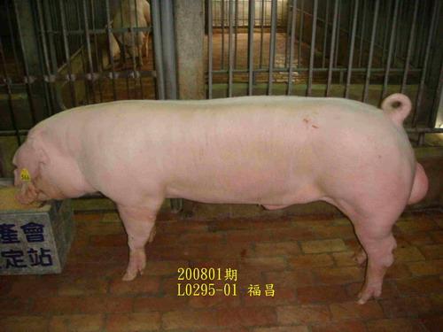 中央畜產會200801期L0295-01拍賣照片