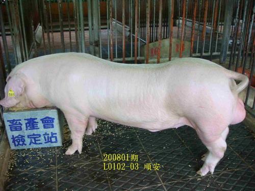 中央畜產會200801期L0102-03拍賣照片