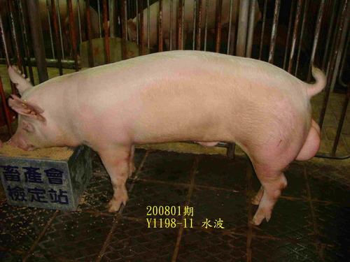 中央畜產會200801期Y1198-11拍賣照片