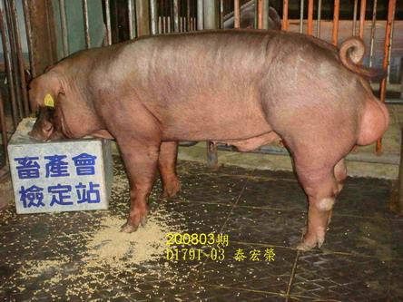 中央畜產會200803期D1791-03拍賣照片