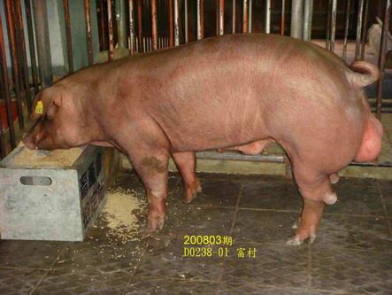 中央畜產會200803期D0238-01拍賣照片