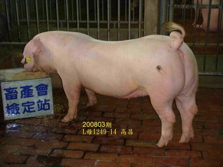 中央畜產會200803期L1249-14拍賣照片