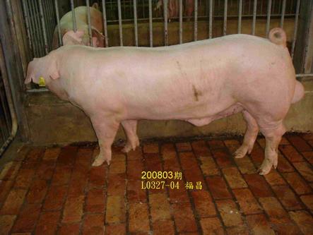 中央畜產會200803期L0327-04拍賣照片
