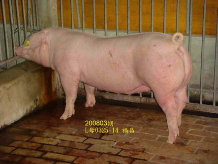 中央畜產會200803期L0325-14拍賣照片