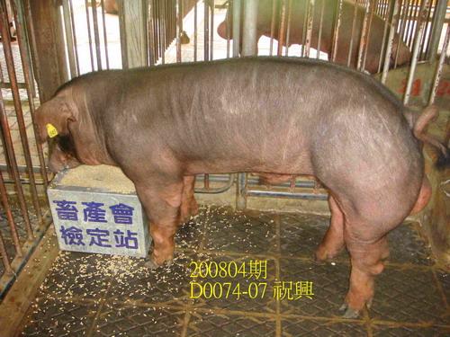 中央畜產會200804期D0074-07拍賣照片