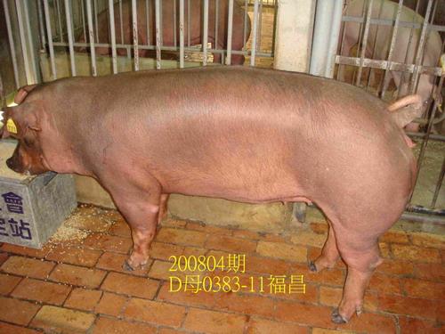 中央畜產會200804期D0383-11拍賣照片
