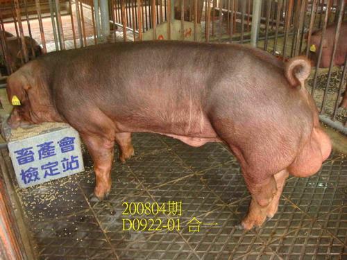 中央畜產會200804期D0922-01拍賣照片