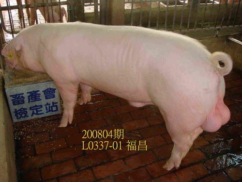 中央畜產會200804期L0337-01拍賣照片