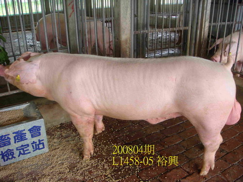 中央畜產會200804期L1458-05拍賣照片