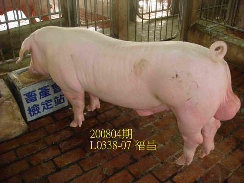中央畜產會200804期L0338-07拍賣照片
