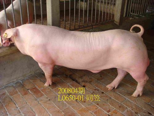 中央畜產會200804期L0650-01拍賣照片
