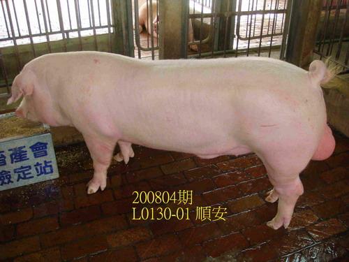 中央畜產會200804期L0130-01拍賣照片