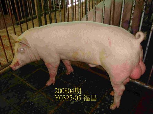 中央畜產會200804期Y0325-05拍賣照片