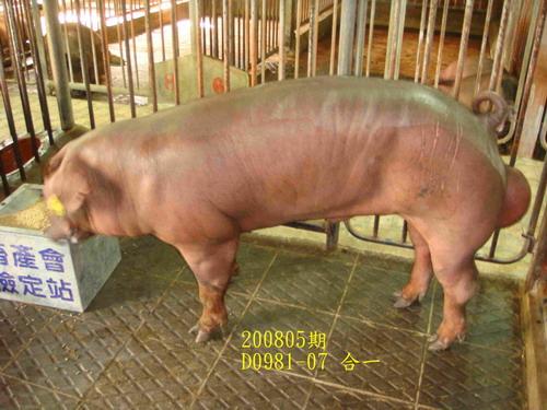 中央畜產會200805期D0981-07拍賣照片