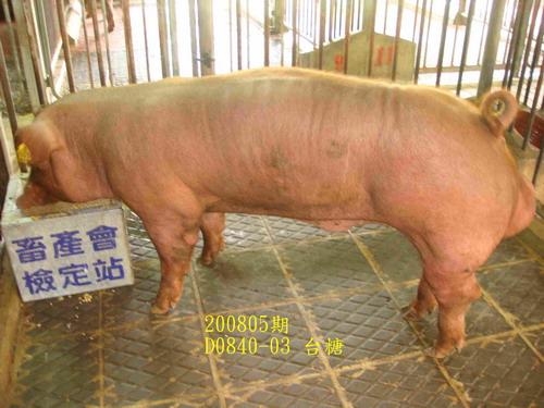 中央畜產會200805期D0840-03拍賣照片