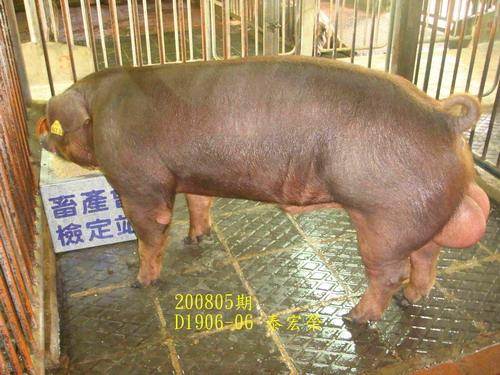 中央畜產會200805期D1906-06拍賣照片