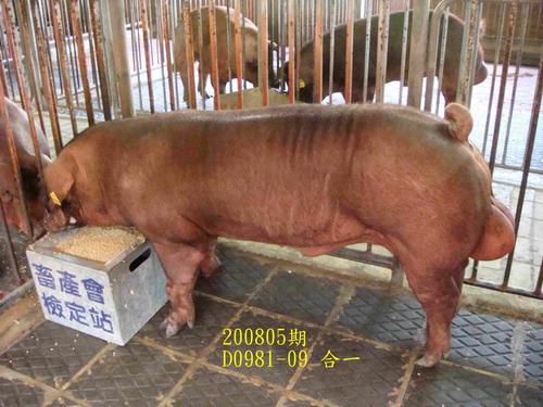 中央畜產會200805期D0981-09拍賣照片