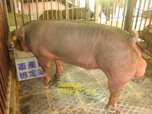 中央畜產會200805期D0430-02拍賣照片